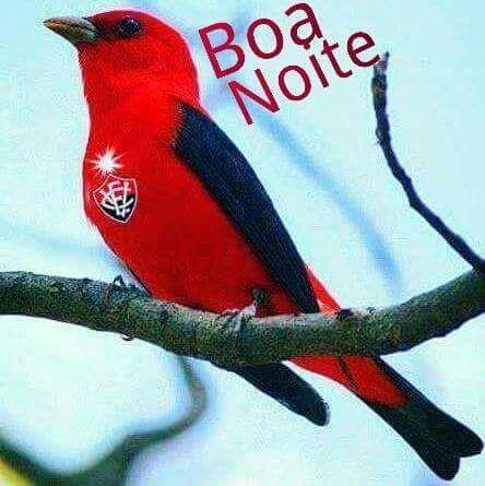 8707862bfb Resenha rubro-negra  título do Vitória rende   gastação   a ...