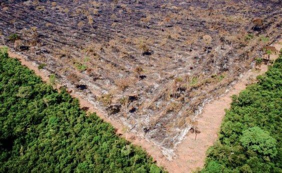 [Desmatamento na Amazônia aumenta 9,5% e atinge recorde de 12 anos]