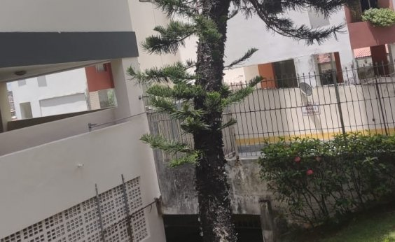 [Você Repórter: moradores pedem remoção de pinheiro à prefeitura]
