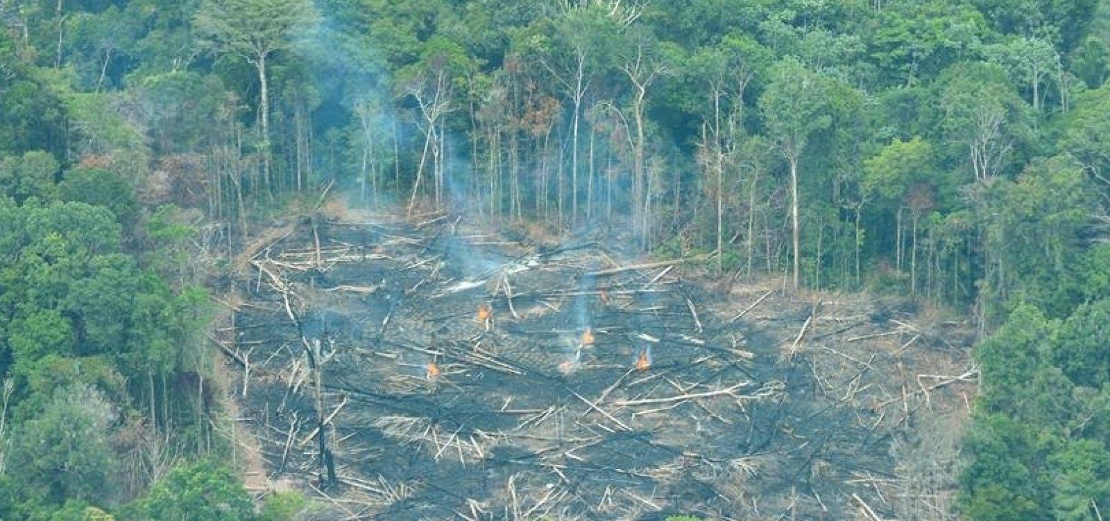 [Desmatamento na Amazônia cresceu 14% em dezembro, aponta Inpe]