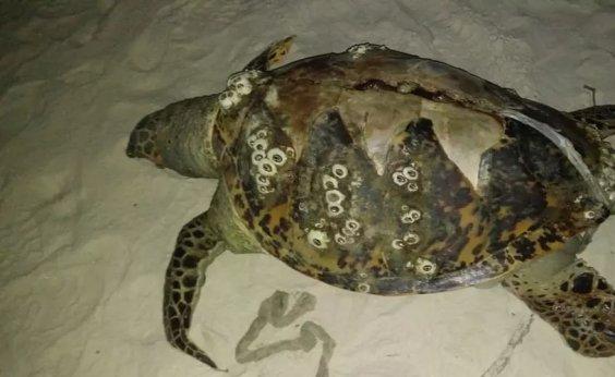 [Três tartarugas são encontradas encalhadas no sul da Bahia]
