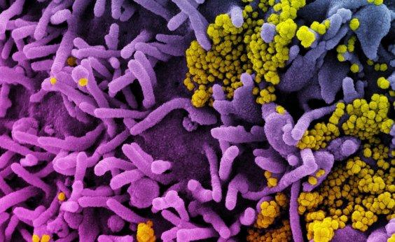 [Estudo sugere que variante de Manaus pode escapar dos anticorpos produzidos pela Coronavac]