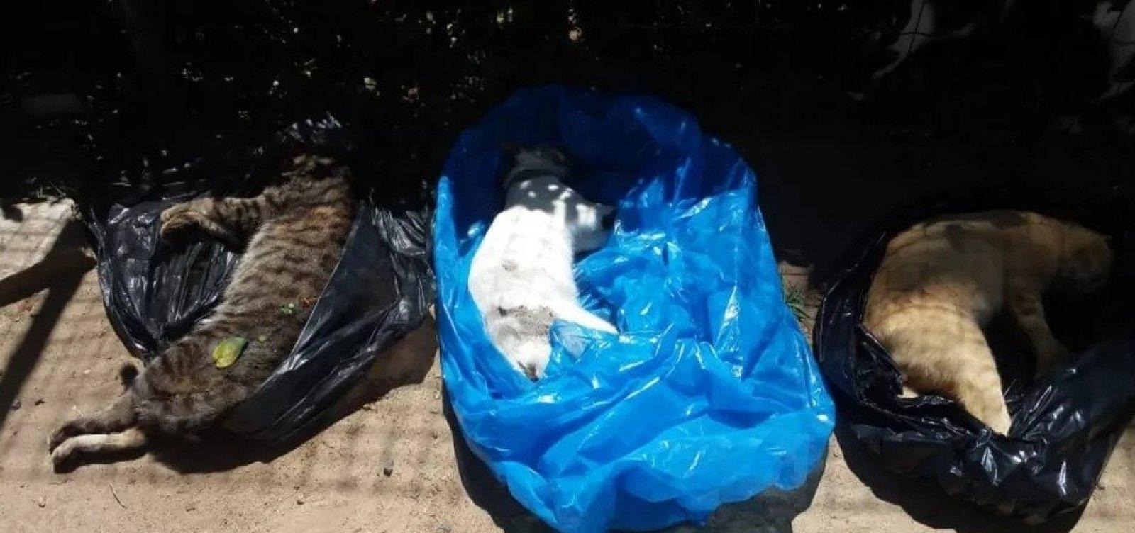 [Moradores denunciam morte de 18 gatos e desaparecimento de outros 20 em condomínio na Bahia]