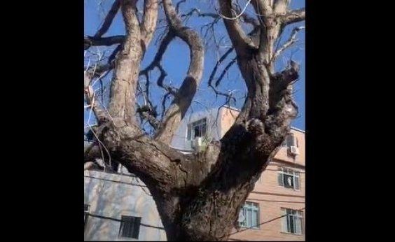[Você Repórter: terreiro pede socorro e cobra Coelba e Seman por árvore que ameaça cair]