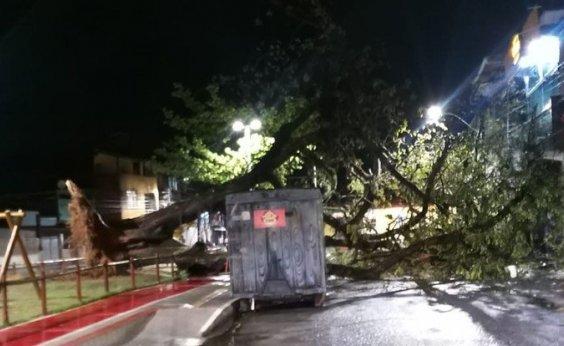 [Com fortes chuvas em Salvador, árvore cai em praça de Periperi]