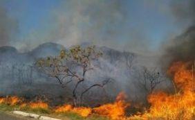 [Pesquisa mostra crescimento de 27,5% no número de queimadas no país]