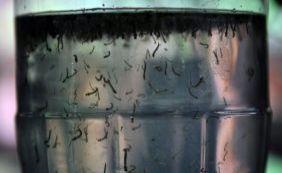 [Governo libera mais R$ 500 mi para combate ao Aedes e a microcefalia]