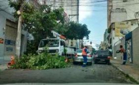 [Troca de poste e poda de árvore complicam o trânsito nesta manhã; confira]
