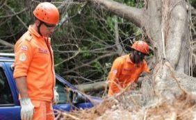 [Especialista contesta versão da Prefeitura sobre queda de árvore]