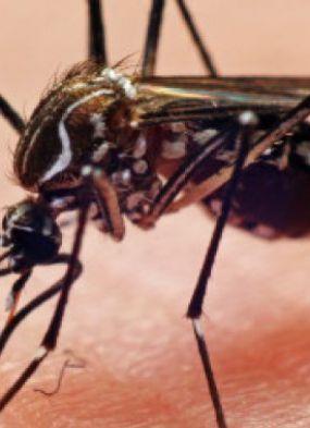 Organização Mundial da Saúde diz que zika vírus vai se proliferar pela América