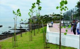 [Após obras de requalificação, Rio Vermelho ganha 150 novas mudas de árvores]