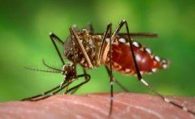 [Casos de Zika são confirmados por autoridades do Canadá e Peru]
