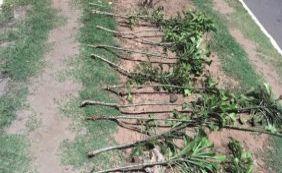 [Cerca 40% das áreas verdes recuperadas foram danificadas por vândalos]