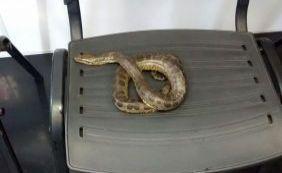 [Cobra sucuri é encontrada no circuito Osmar próximo à Praça Castro Alves]
