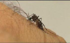 [Ministro diz que vacina contra Zika pode ser desenvolvida em até um ano]