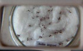[Zika: México confirma 11 grávidas infectadas pelo vírus]