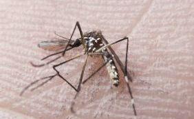 [Comissão Europeia investe 10 milhões de euros em estudos sobre Zika]