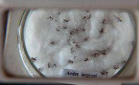 [Fundação lança edital de apoio a projetos de pesquisa sobre a Zika]
