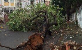 [Com chuvas, árvore cai sobre pista no bairro da Graça, em Salvador]
