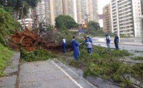 [Árvores caídas complicam o trânsito na Pituba e na Av. Garibadi ]