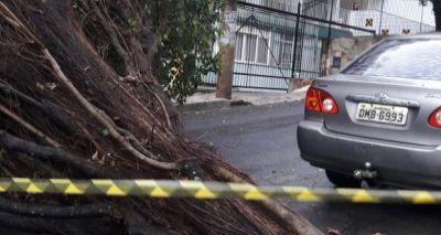 Chuva: árvore cai na Barra e provoca estragos; ninguém ficou ferido