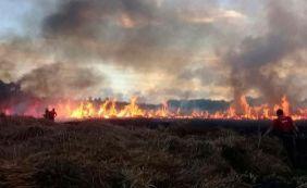 [Bombeiros tentam combater incêndio em vegetação na Praia do Forte]
