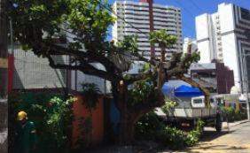 [Após denúncia do Metro1, poda de árvore é concluída no Imbuí]