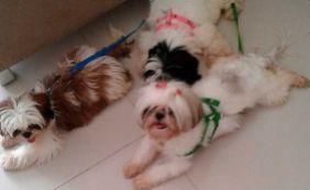 [Suposto adestrador é preso e quatro cães são recuperados em Periperi]