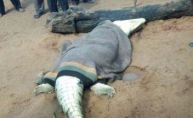 [Grupo abre barriga de crocodilo e encontra corpo de menino de 8 anos; veja vídeo]