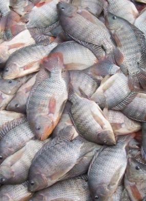 Apesar da relação com peixe, pesquisador diz que síndrome é situação excepcional
