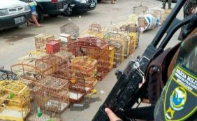 [Crime ambiental: Onze pessoas são presas e 63 aves apreendidas em Salvador]