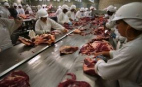 ['Carne Fraca': dois frigoríficos investigados demitem 280 funcionários e fecham]