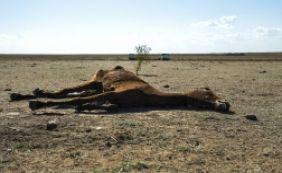 [Governo e Embasa trabalham para melhorar situação da seca na Bahia]