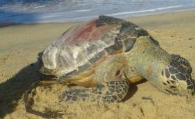 [Tartaruga marinha é achada morta em praia de Prado; segundo caso em um mês]