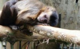 [Macaco morto encontrado na Vila Laura tinha vírus da Febre Amarela]