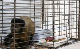 [Macacos com indícios de contaminação por febre amarela são resgatados]