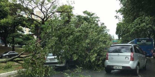 [Árvore cai sobre veículo na Av. Garibaldi; motorista sofre ferimentos leves]