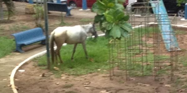 [Você Repórter: cavalo solto é flagrado em praça frequentada por crianças]