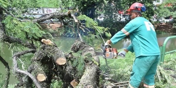 [ Após acidente, Prefeitura vistoria risco de queda de árvores no Dique]