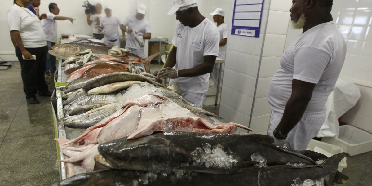 [Terminal pesqueiro oferece descontos de até 38% em frutos do mar]