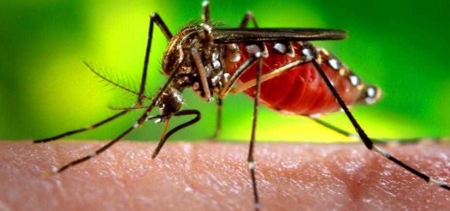 [Bahia tem 15 notificações por febre amarela em humanos; nenhuma em Salvador]