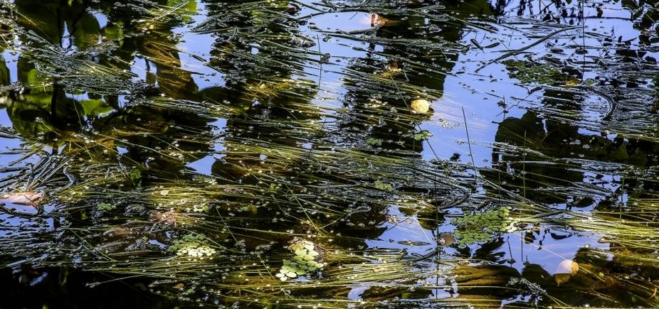 [Mostra de Carlos Barral reúne fotos inéditas feitas em rios do Brasil]