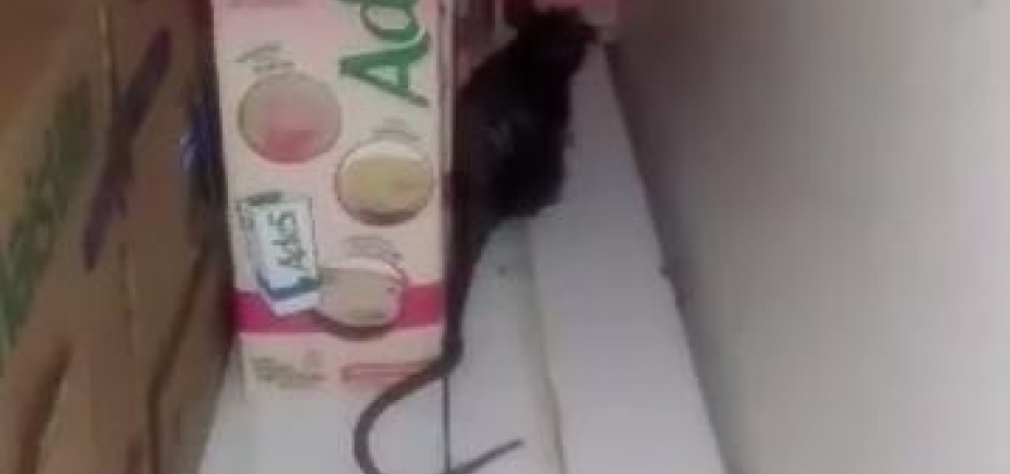 [Rato é flagrado passeando em caixas de leite no Atakarejo do Caminho de Areia; veja vídeo]