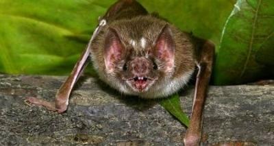 Ataque de morcegos em Salvador preocupa Centro de Zoonoses; raiva é investigada
