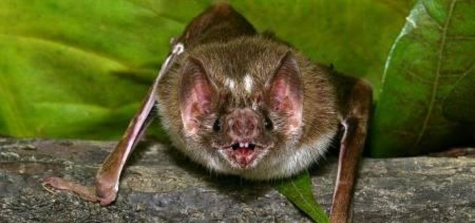 [Ataque de morcegos em Salvador preocupa Centro de Zoonoses; raiva é investigada]