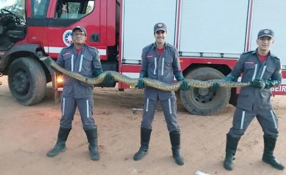 Cobra de três metros é encontrada dentro de empresa de alimentos