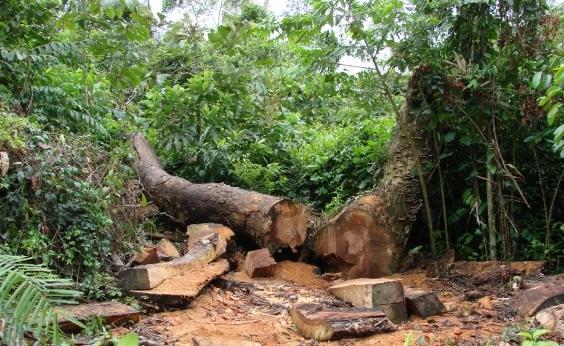 Bahia é a campeã nacional de desmatamento da vegetação atlântica entre 2015 e 2016, diz Inpe