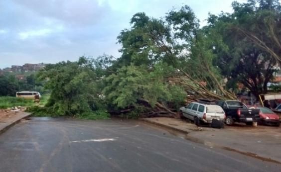 Árvore cai e bloqueia os dois sentidos da Av. Gal Costa