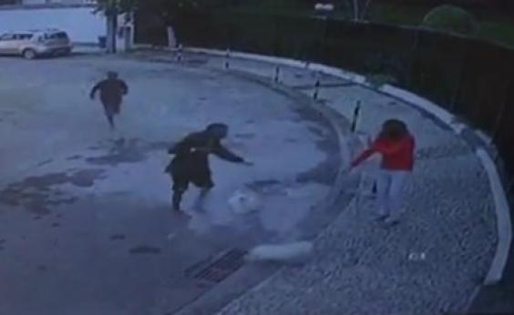 Câmeras flagram momento em que Malteses são roubados; cães foram encontrados na Federação