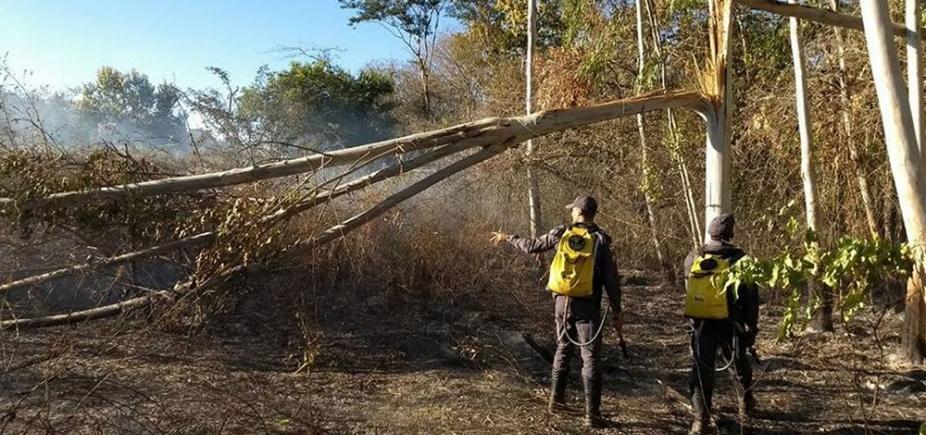 [Barreiras: Árvore cai sobre rede elétrica e provoca incêndio em mata fechada]
